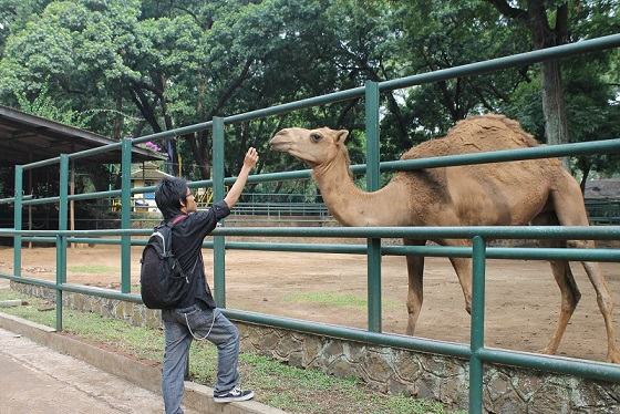 Tempat Wisata Kebun Binatang Paling Hits di Jawa Barat